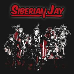 Siberian Jay: I'm Holding