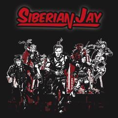 Siberian Jay: Fallin'