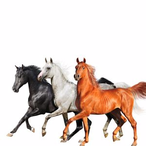 Lil Nas X, Billy Ray Cyrus & Diplo: Old Town Road
